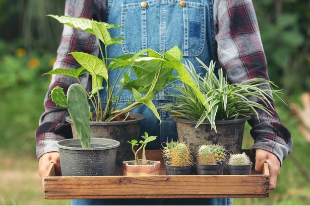 Houseplants to Decorate and Brighten Up Any Living Space